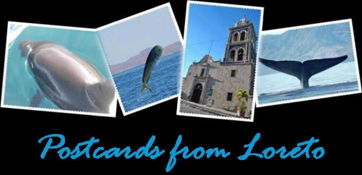 Activities in Loreto Baja