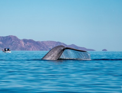 Whale watching sea of cortez (1024x635)