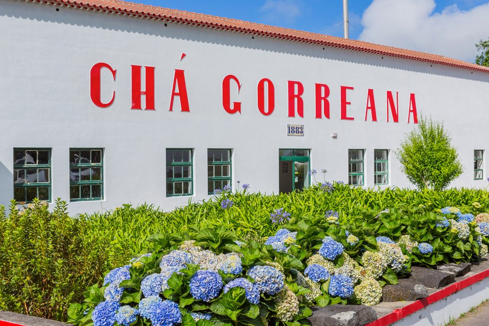 cha gorreana portugal tea plantation