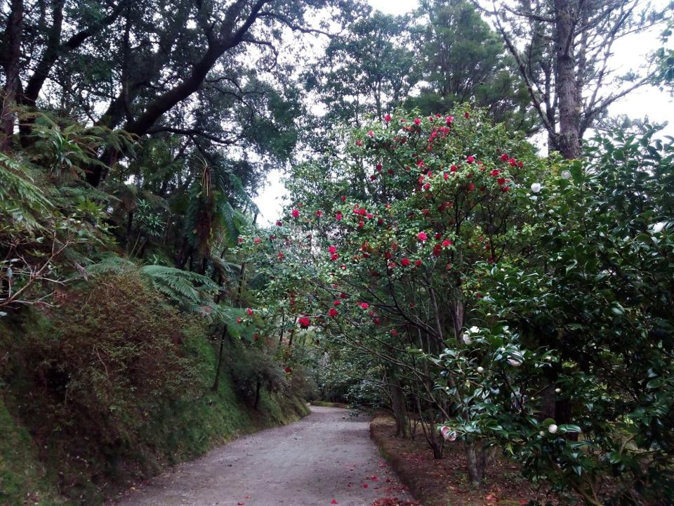 furnas sao miguel flowers path azores