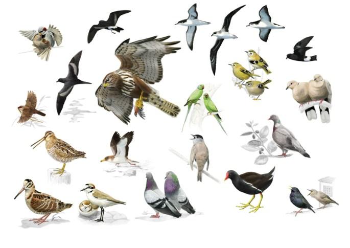 birdsofaz