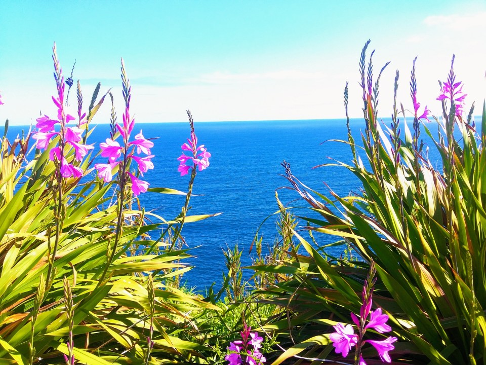 Azores Flowers Growing Wild at Eco-Resort Sao Miguel Island