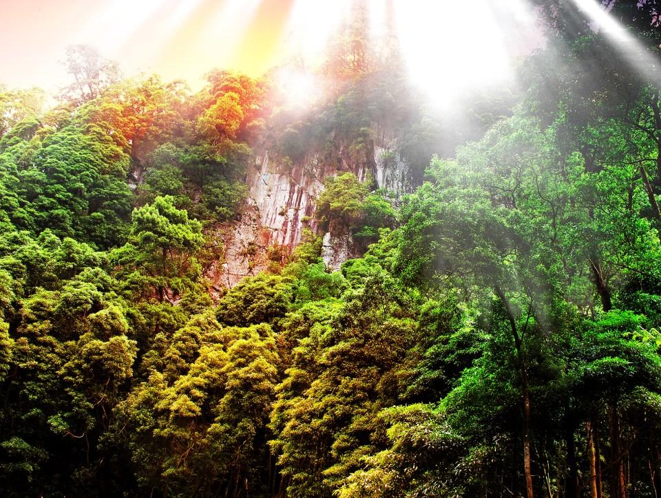 Macaronesia Islands Rain Forest Laurel Forest