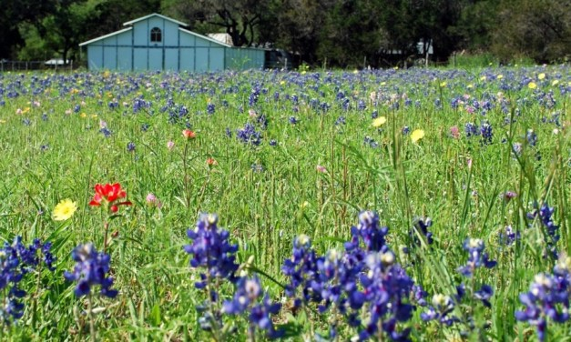 Wimberley, Texas Listed as one of TripAdvisor.Com's Rising Destinations!