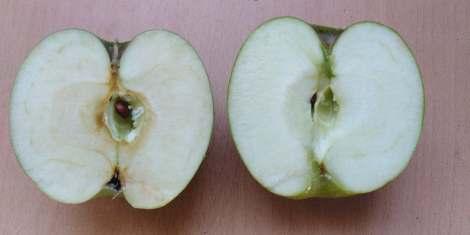 Deux demi pommes : une oxydée, l'autre non
