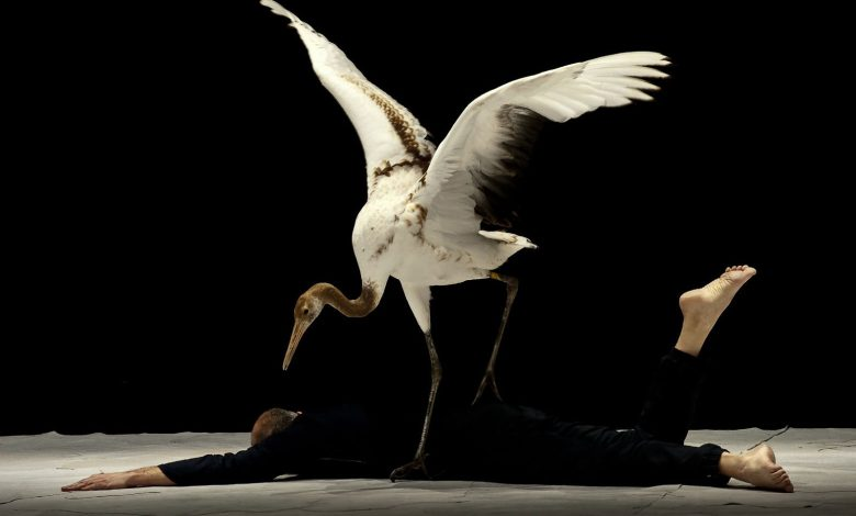 Photo of «Light Bird» à Metz : un spectacle rarissime bientôt à l'Arsenal