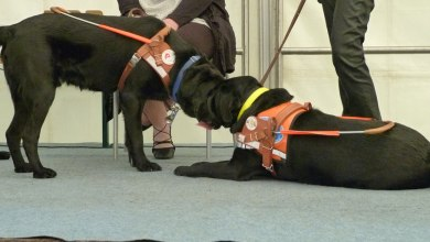 Photo of Visites et démonstrations à Woippy : l'École des chiens guides de l'Est ouvre ses portes