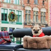 Погода в Бельгии зимой: 6 причин не отменять поездку