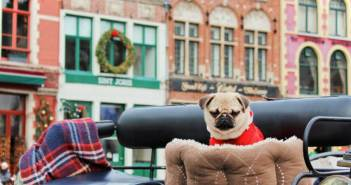 6 причин побывать в Бельгии зимой