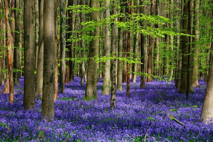 Из Брюсселя на один день: лес Халлербос
