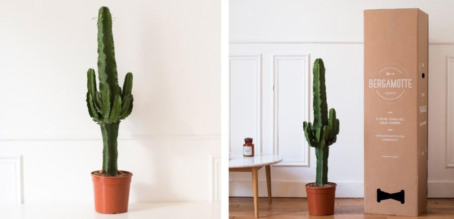 cactus-bergamote