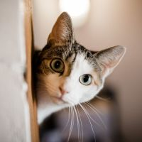 Comment j'ai stimulé le cerveau brillant de mon chat