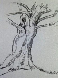 comment dessiner un tronc d arbre r aliste en 3 tapes. Black Bedroom Furniture Sets. Home Design Ideas