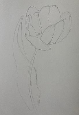 La tige et la feuille de la tulipe