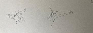 Comment dessiner un oiseau facilement