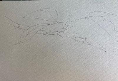 Comment peindre facilement des cerises