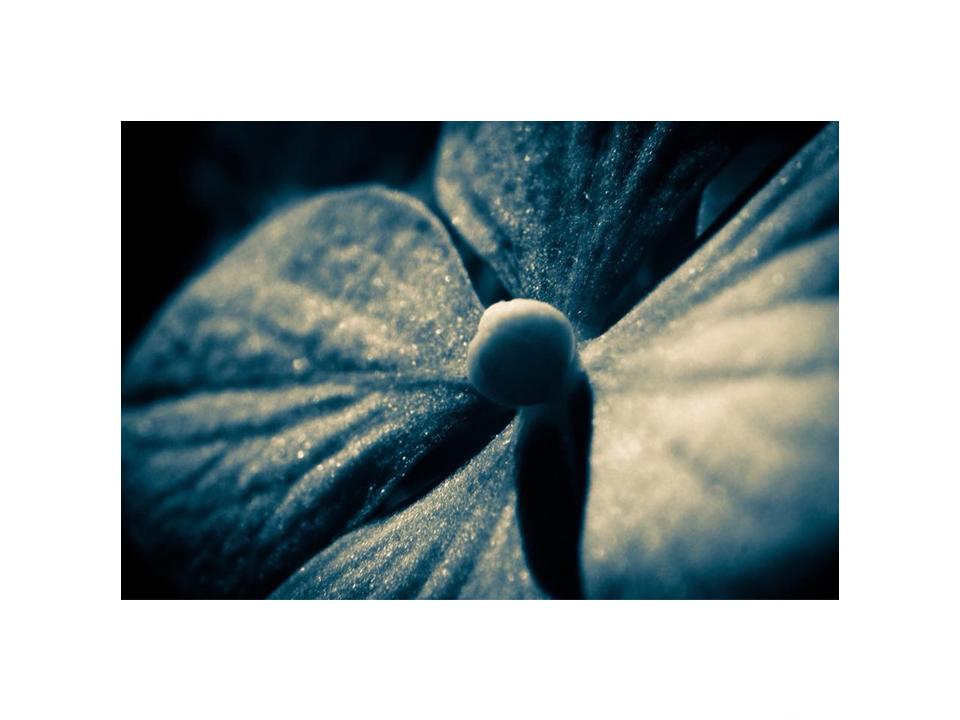 Photographie fleur sexual healing par Anna Yurienen Gallego artiste photographe