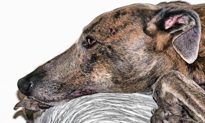 La sénilité chez les animaux explose