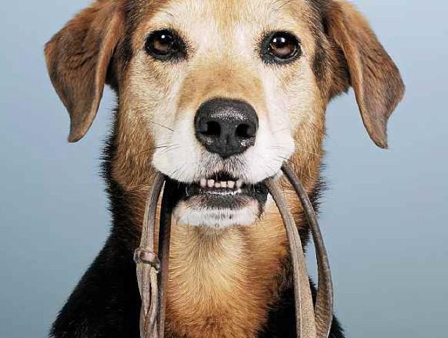 «Mon chien» – la nouvelle brochure de l'OSAV sur les chiens