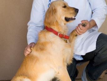 L'arthrose du chien : comment détecter et soulager les douleurs de votre animal