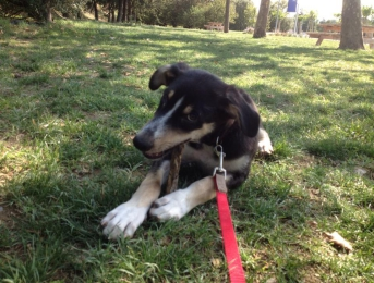 Sol est adopté en Suisse et s'appelle maintenant Barney