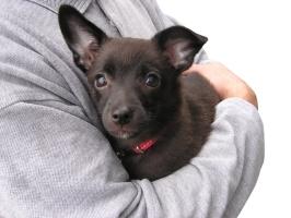 10 choses que nous faisons aux chiens mais que ceux-ci détestent