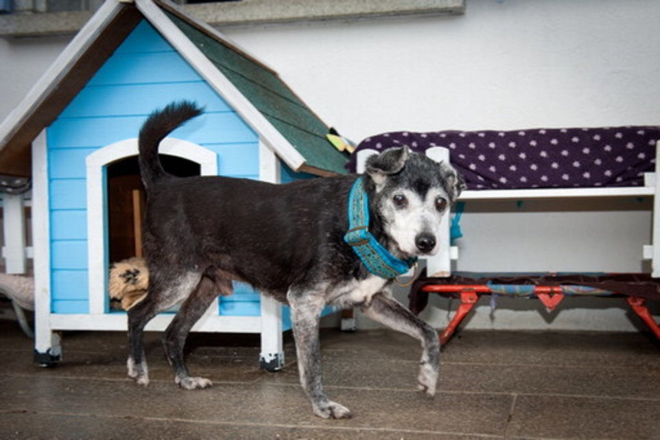 Le plus vieux chien du monde vit à Vaulruz