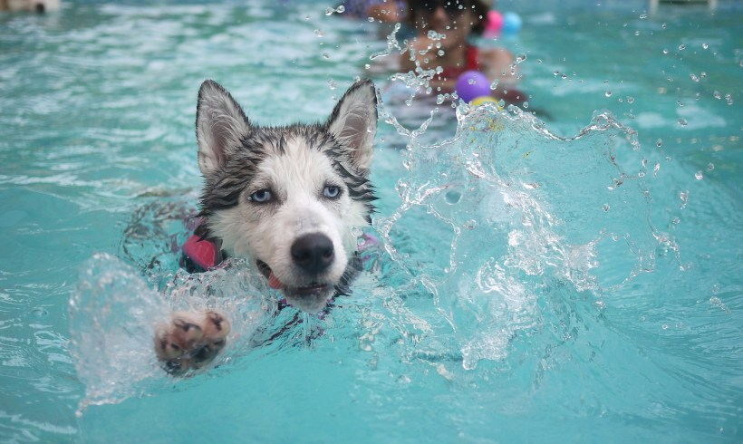 Mon chien à la plage, à la montagne, à la piscine : les précautions