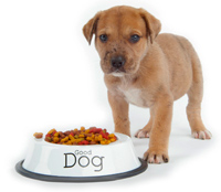 dog_food0