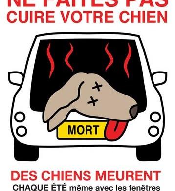 Ne laissez pas votre chien dans votre voiture!