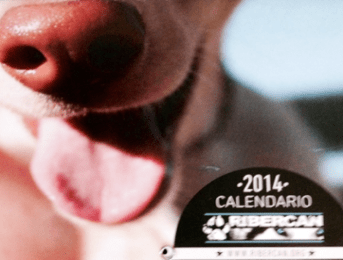 Commandez le calendrier 2014 du refuge Ribercan !