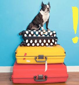 Que faire du chien durant les vacances
