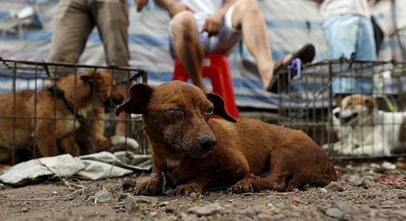 Faisons fermer le festival de viande canine de Yulin!