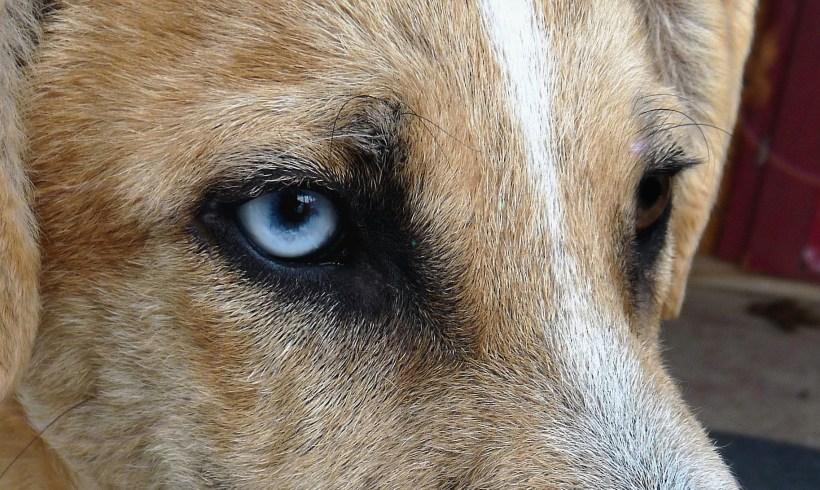 Enquête: quels droits pour les animaux?