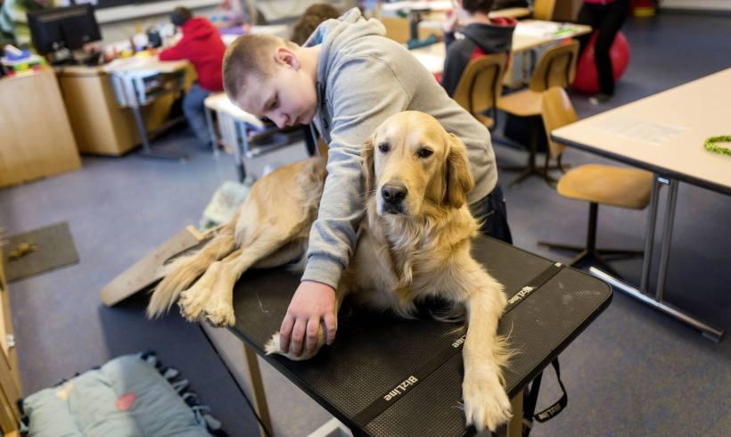 Un chien à l'école