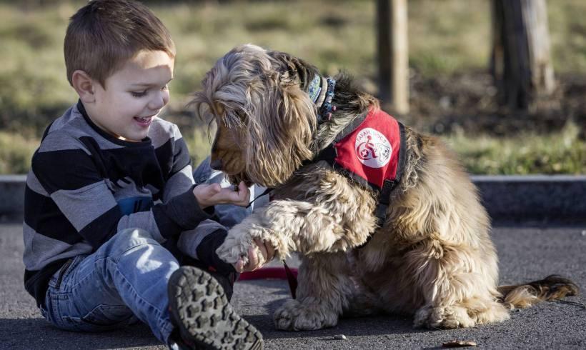 Ces chiens qui aident les malades