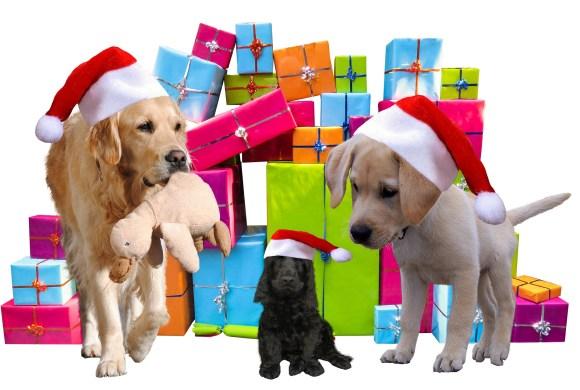 Non! Un animal n'est pas un cadeau de Noël!