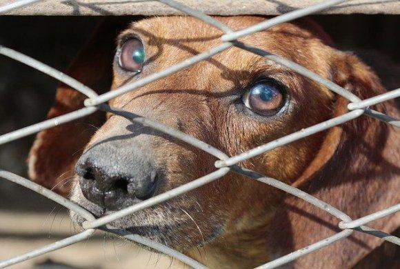 Hausse des demandes d'adoptions pour les animaux dans les SPA