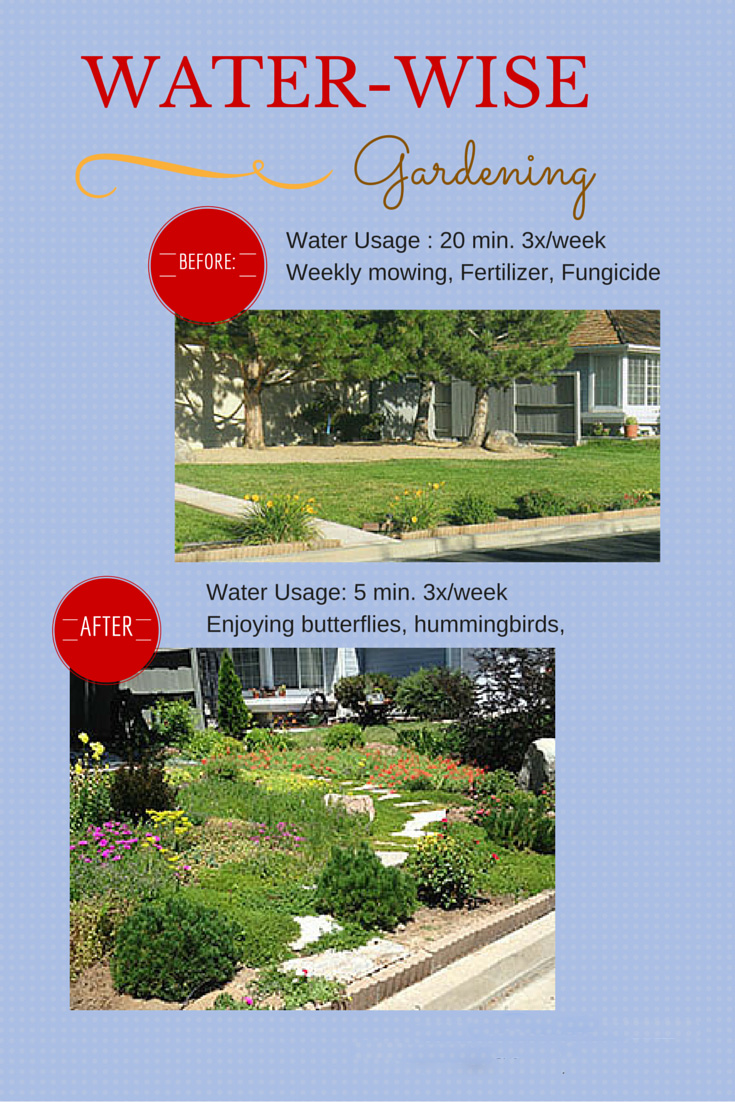 Water Wise Gardens Groundcovers
