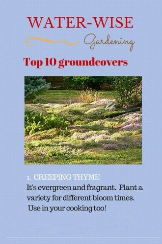 Water-wise-groundcover-creeping-thyme