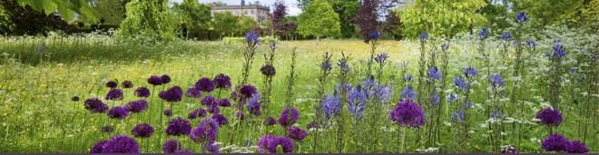 organic meadows