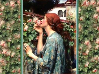 fragrant-rose