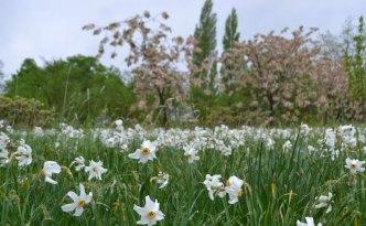 spring-walk-sissinghurst