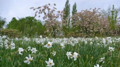 plant-a-spring-walk-sissinghurst