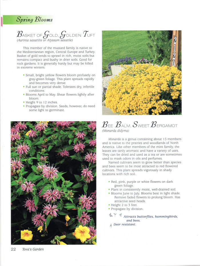 Page 22 Perennials Book by Tova Roseman