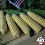 Corn, Sweet American Dream 2018 winner