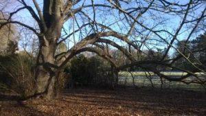 bomenwandeling20161204_008c