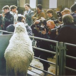 Dolly The Sheep Cloning Diagram Palmate Leaf Roslin Institute