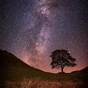 jim kearneySycamore Gap Milky Way 2339