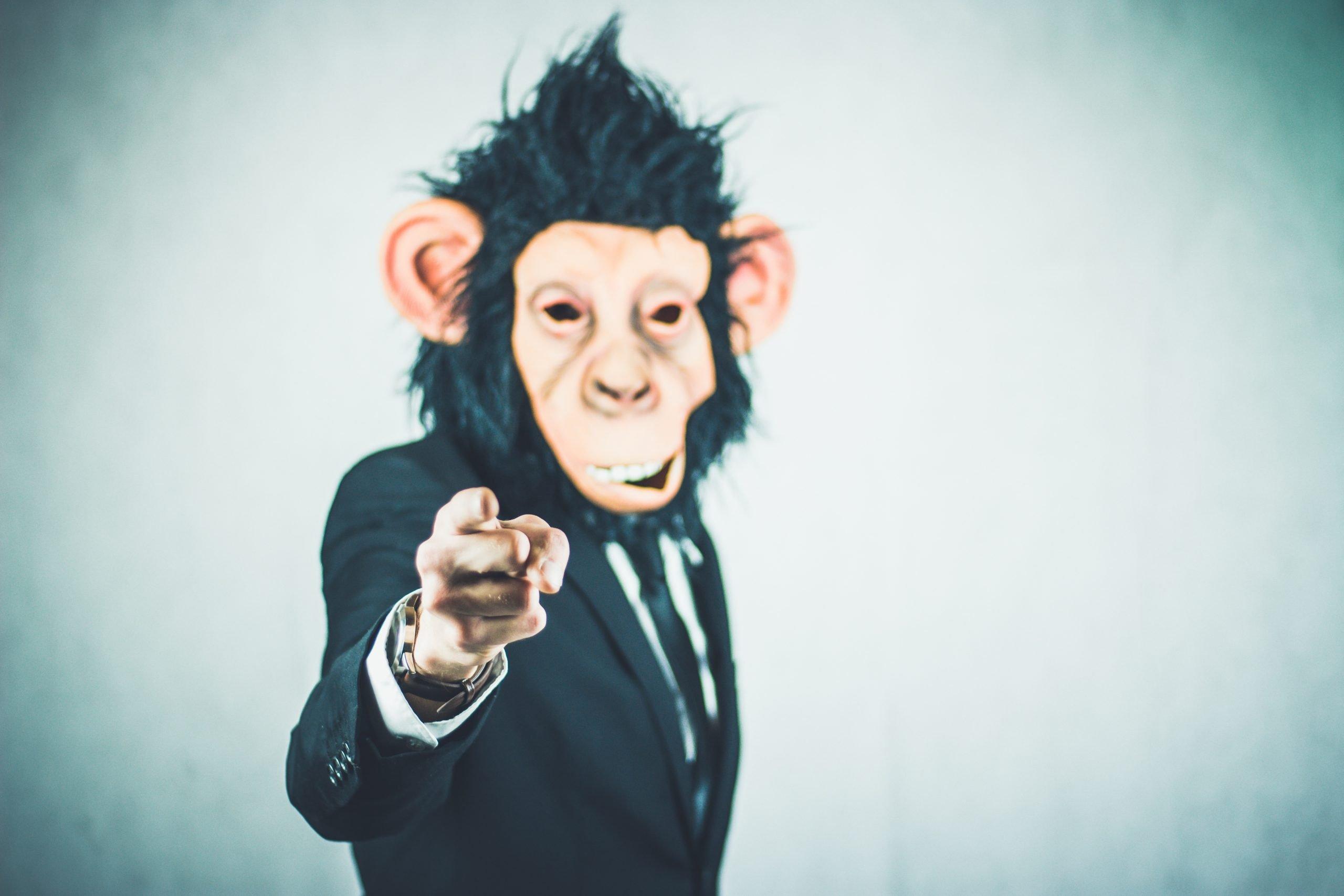 monkey-2710657